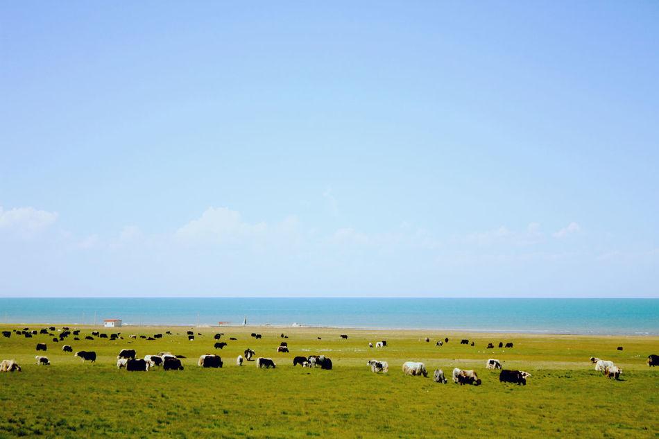 Nature Travel Xining Qinghai
