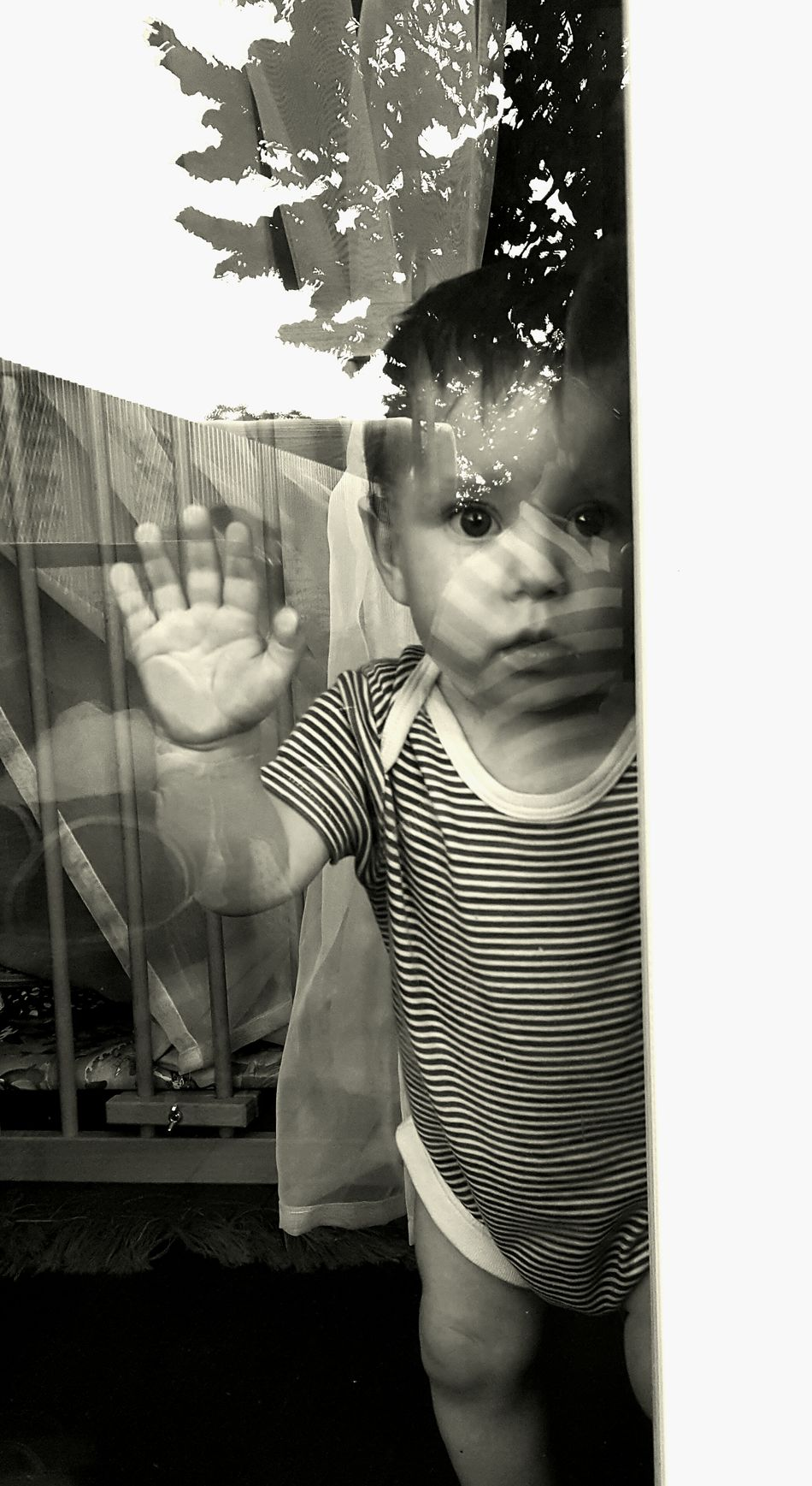 Young Boy Baby Boy Babyboy Baby Photography First Steps First Step  Inside The Windows Looking Outside Looking Out Of The Window What Is Out There Outside Unknown Unknow World Challenge The World Black And White Photography Light And Shadow Lines And Shapes Reflections Reflection_collection Tree Reflection On Glass Window Fine Art Photography Schwarzweiß