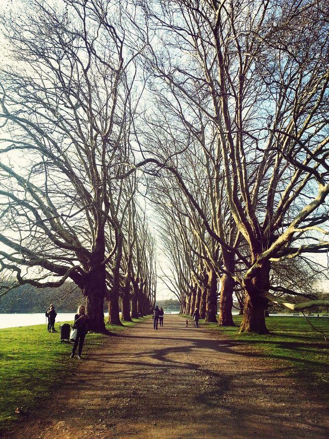 Nature Tree Decksteinerweiher