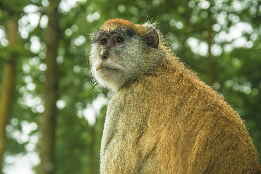 Monkey Business is serious Animals In The Wild Baby Family Learning Monkeys Role Model Tiny Animal Themes Behaviour Bonding Caring Cute Day Learn To Climb Mammal Maternal Animals Monkey Monkey Business Monkey Face Nature Newborn Monkey Outdoors Parenthood Small Treetops