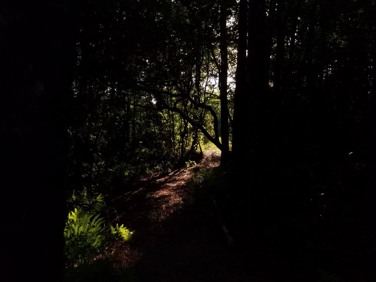 Follow the light. PhotographybyTripp Smartphone Photography Phoneography Samsung Galaxy Note 7 EyeEm Nature Lover EyeEm Gallery Forest Tree Nature WoodLand Camera360 Pixlr Beastgrip Pro Natural Light Light And Shadow No Edits No Filters Creative Shots Creative Photography Creative Light And Shadow Unique Photography Unique Perspectives EyeEm Gallery Nature_collection Treetastic My Style