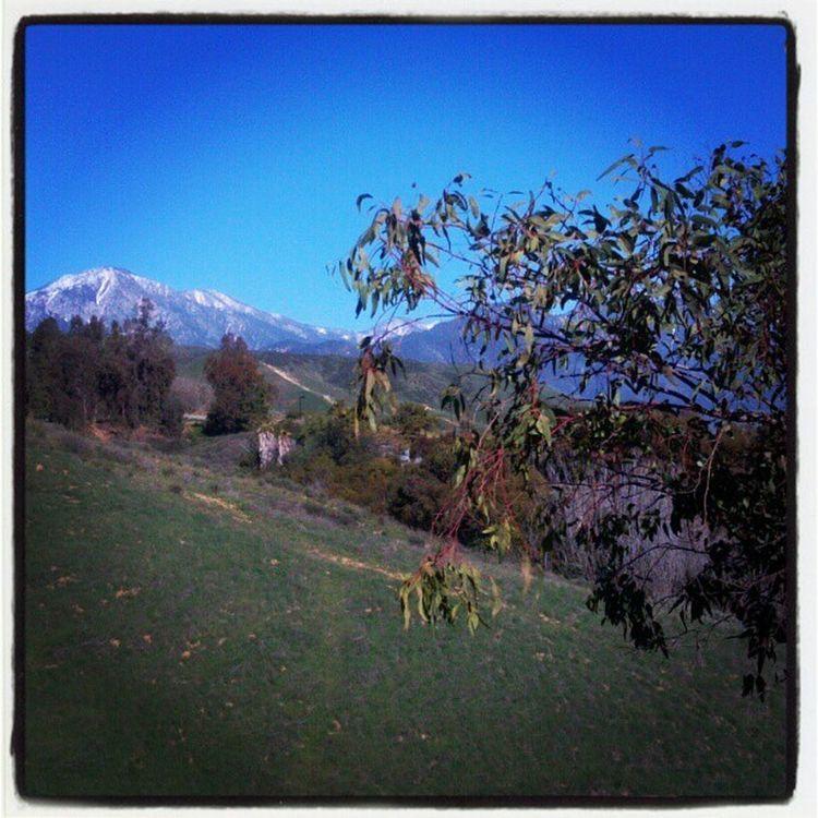Scenery<3 Chc Tree Craftonhills Collegelife Scenery Snow Bigbear Blue Green Pretty Gorgeous View