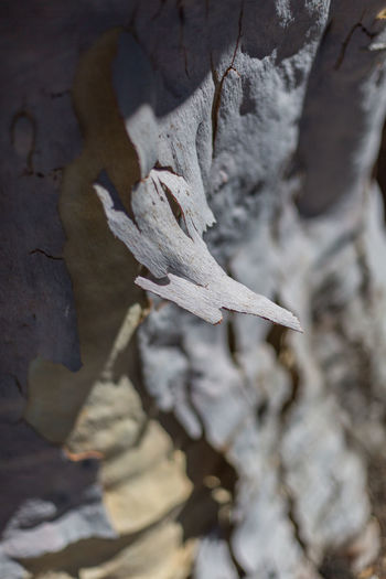 tree barks peeled Barks Of A Tree Barks Peeling Beauty In Nature Close-up Day Nature No People Outdoors Park Park - Man Made Space Shaded Shadows Shallow Depth Of Field Textured  Tree Tree