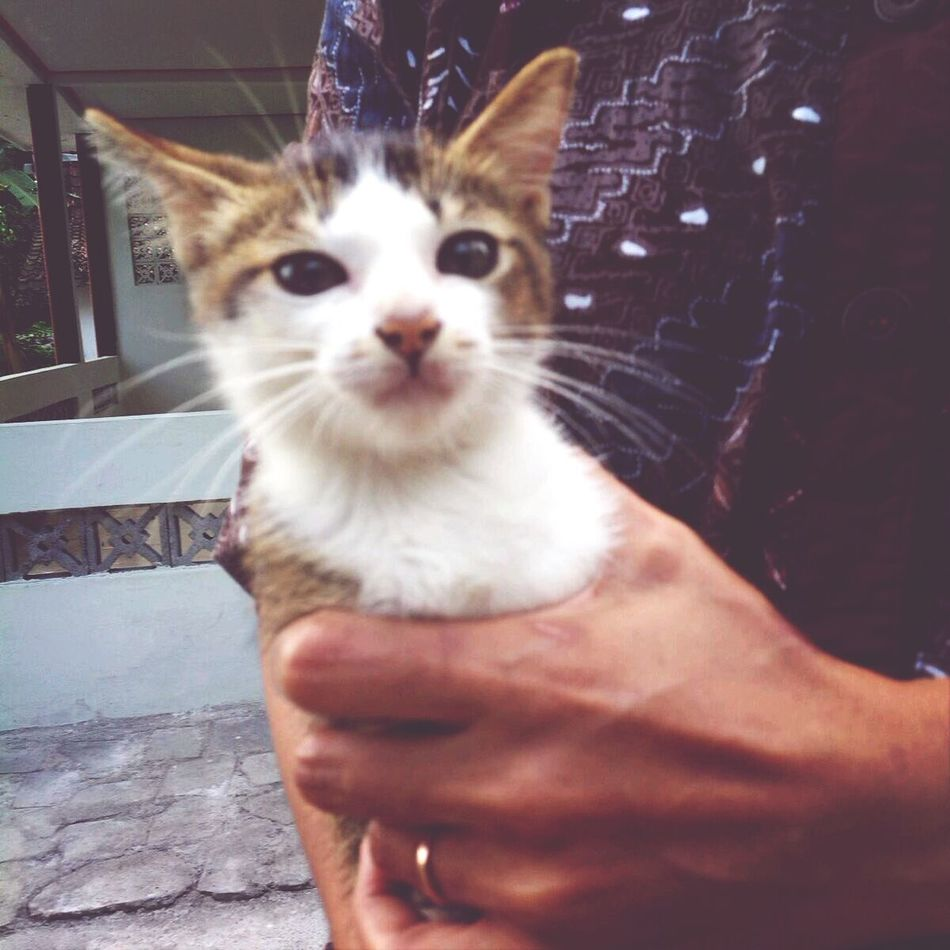 Taking Photos Cat hello world