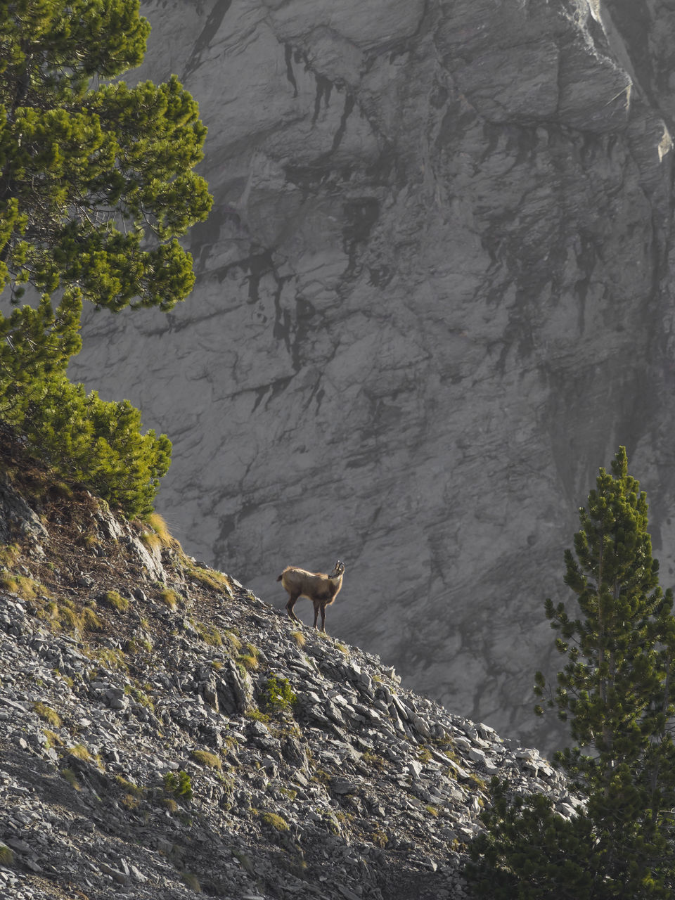 one animal, animal themes, rock - object, mountain, mammal, day, animals in the wild, nature, no people, animal wildlife, outdoors, rocky mountains, cliff, standing, domestic animals, beauty in nature