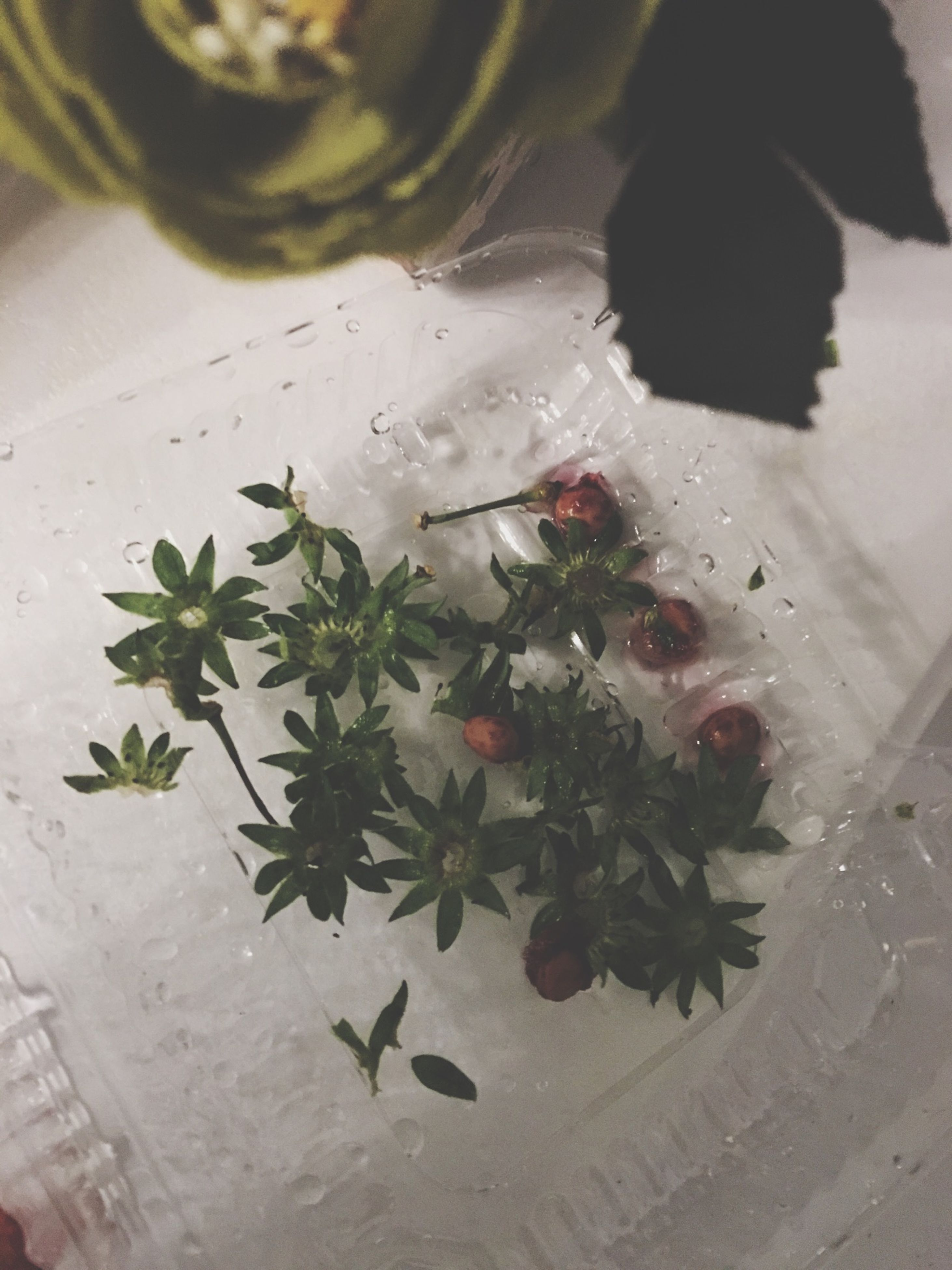 high angle view, indoors, freshness, leaf, table, food and drink, plant, close-up, flower, food, still life, potted plant, no people, flooring, nature, healthy eating, growth, day, fruit, white color