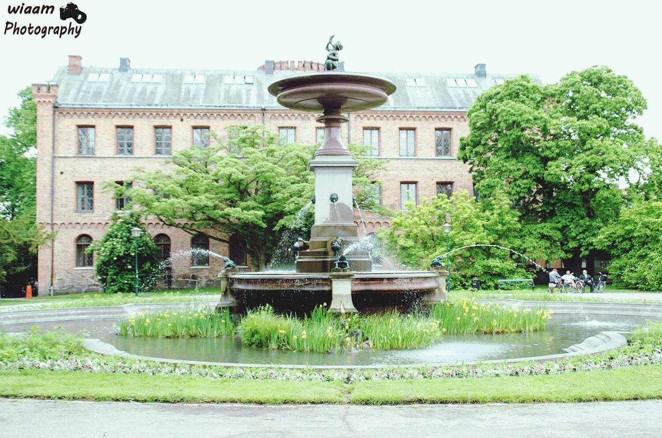 EyeEm Nature Photography Sverige