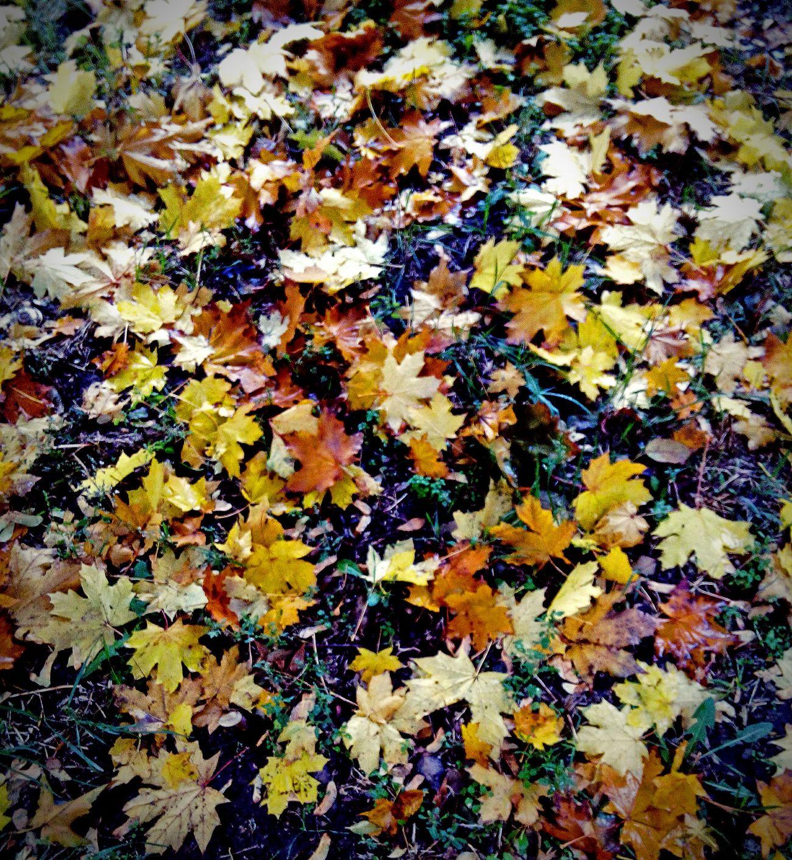 Backgrounds Autumn Close-up No People Nature Leaf Beauty In Nature Outdoors мокрые листья после дождя  Wet Leaves After A Rain Autumn Коричневый Autumn Colors Autumn🍁🍁🍁 осенние листья листья Природа красота желтый Yellow Green Color Grass Flora