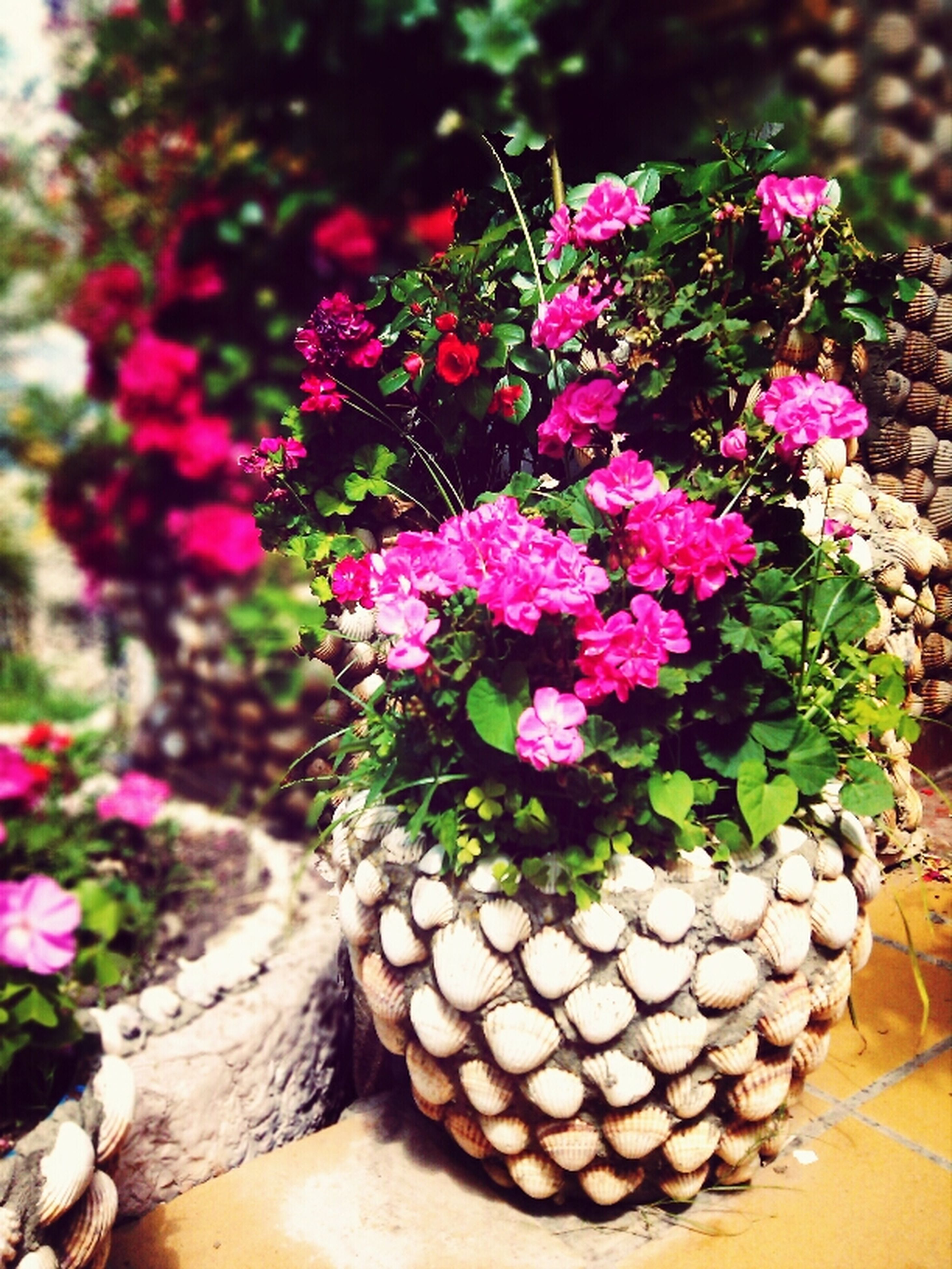 flower, freshness, growth, fragility, plant, beauty in nature, petal, nature, pink color, focus on foreground, close-up, flower head, blooming, outdoors, leaf, day, in bloom, purple, no people, botany