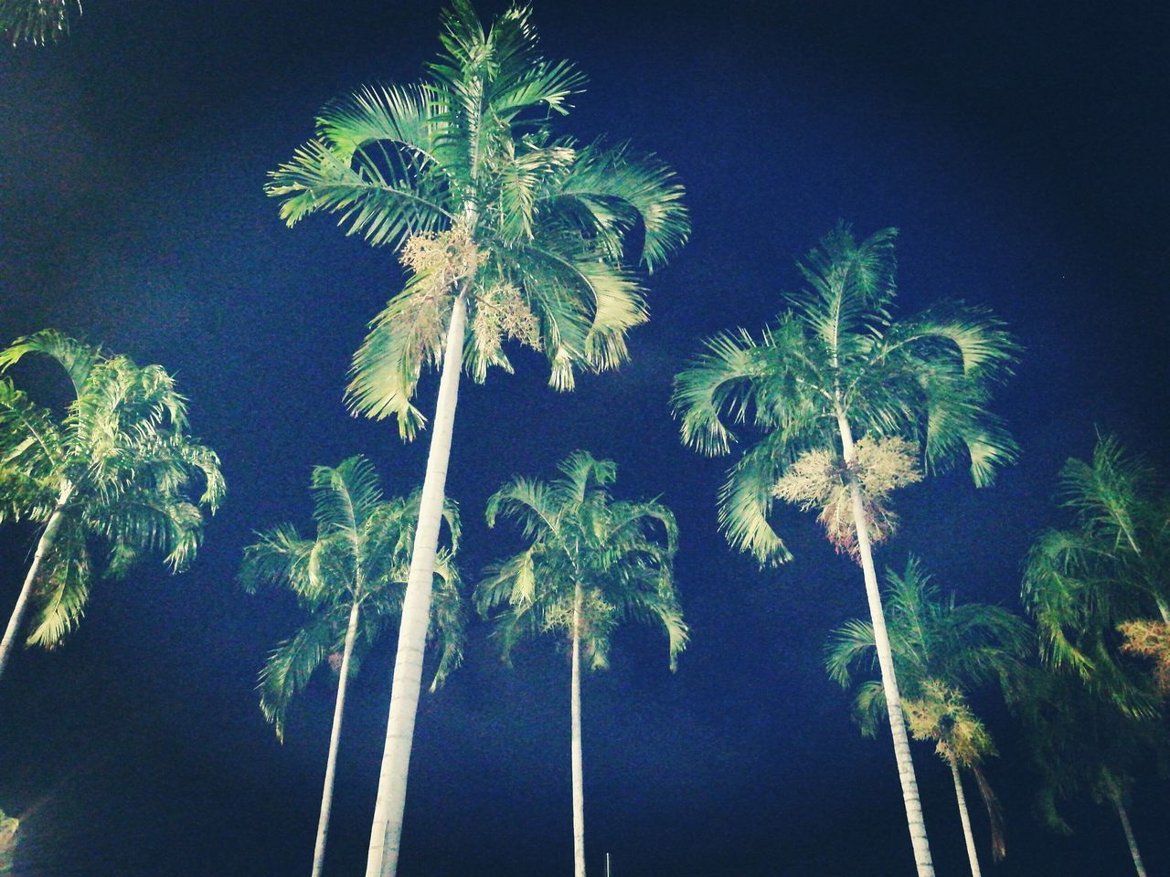 Low Angle View Growth Night Sky Outdoors Blue Palm Tree Plant Nature Tree No People Illuminated Clear Sky Beauty In Nature Close-up Tropical Beauty