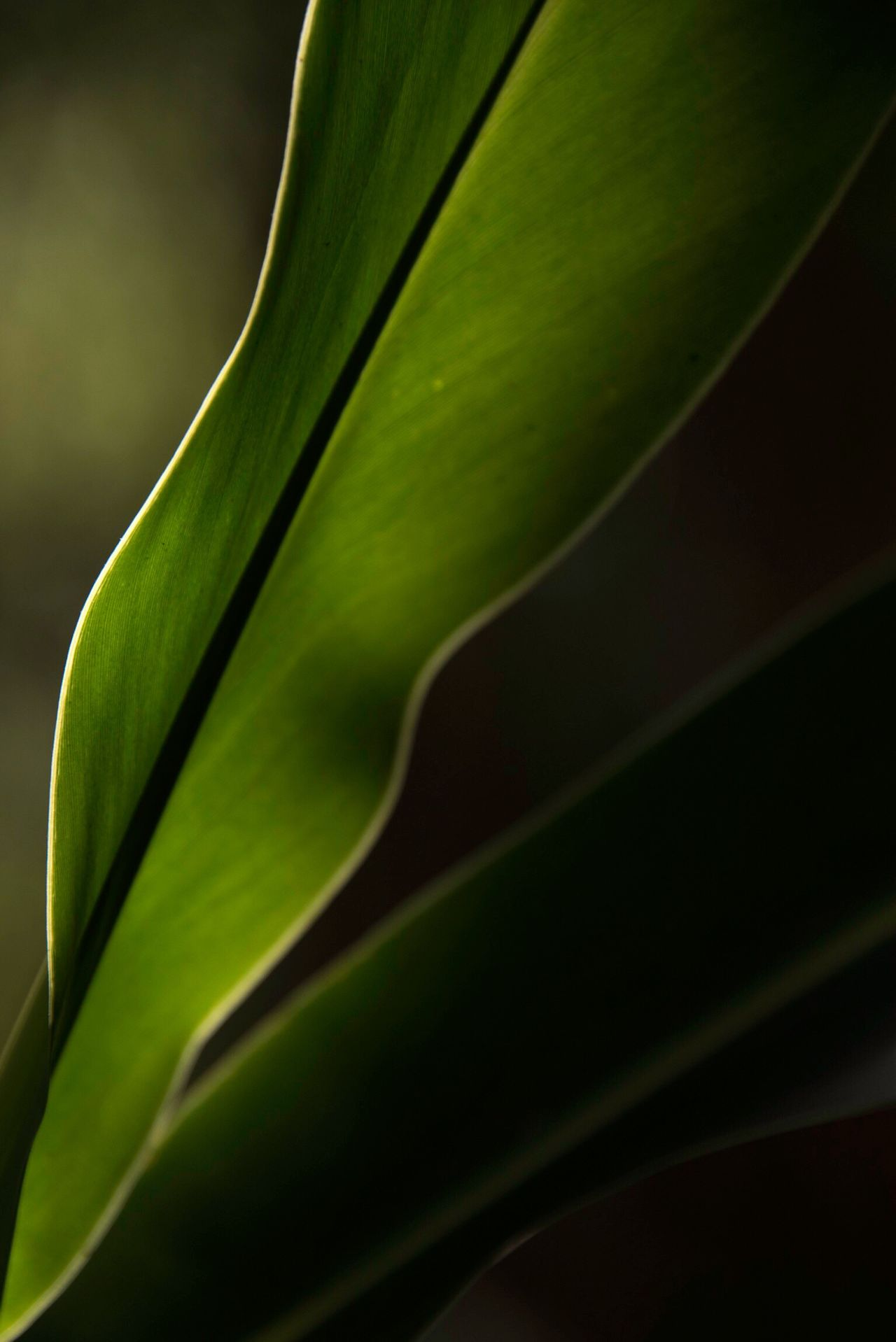 Beautiful stock photos of nature, close-up, green color, growth