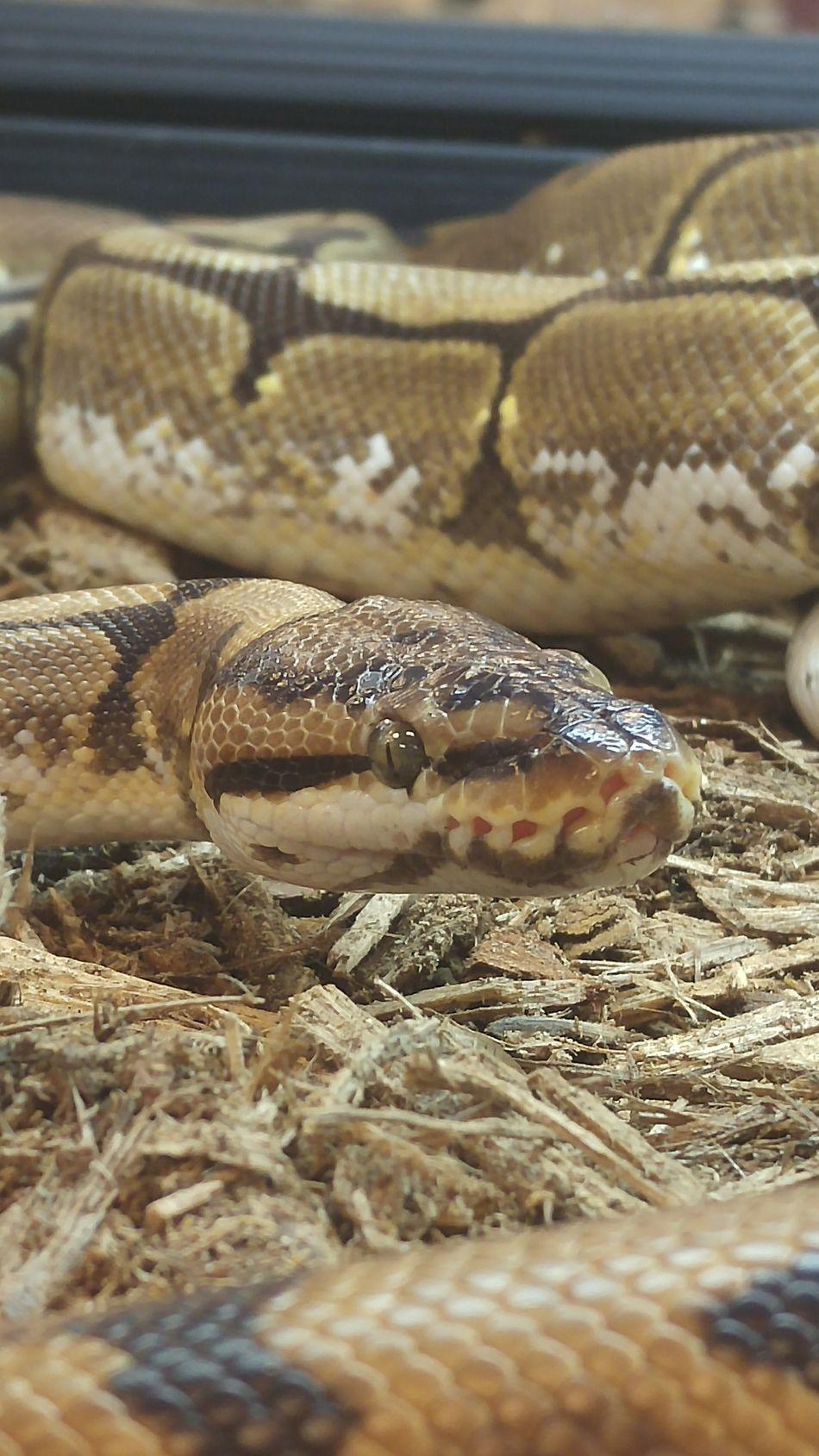 Snake Nashville Exotic Pet Expo 2016 Animals Reptile Baby Snake