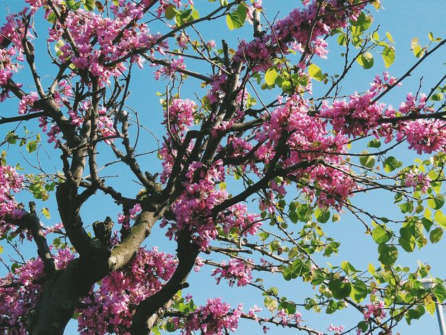 Tree Flower Flowers Branch Beauty In Nature Growth Nature Blossom Outdoors Day Sky Springtime Freshness Backgrounds Scenics Nature_collection Full Frame Nature Tree Beauty In Nature The Week On Eyem