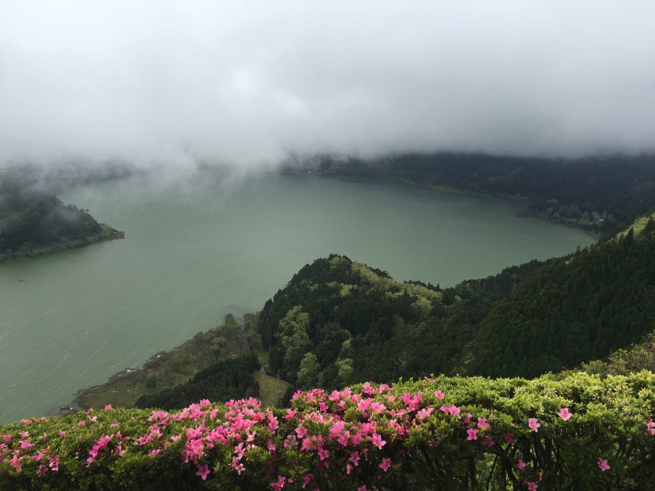 Flower Nature Beauty In Nature Lake Landscape Outdoors Water Fog Tranquility Day Scenics No People Mountain Travel Destinations Plant Springtime Rural Scene Sky Freshness Flower Head Açores - Portugal