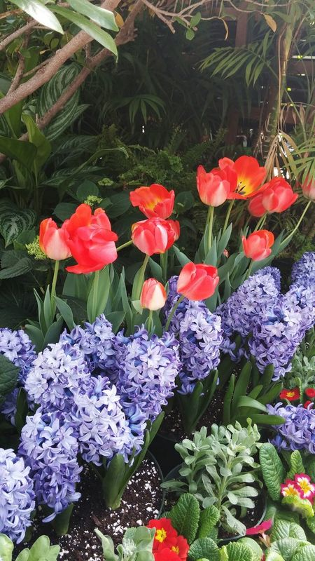 Spring Flowers, Nature And Beauty Flowers Flowerporn Flowerlovers