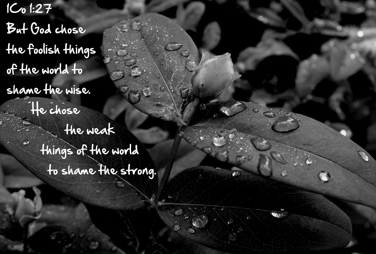 Strong Weak Wise God Relaxing Flowers Changemind Blackandwhite