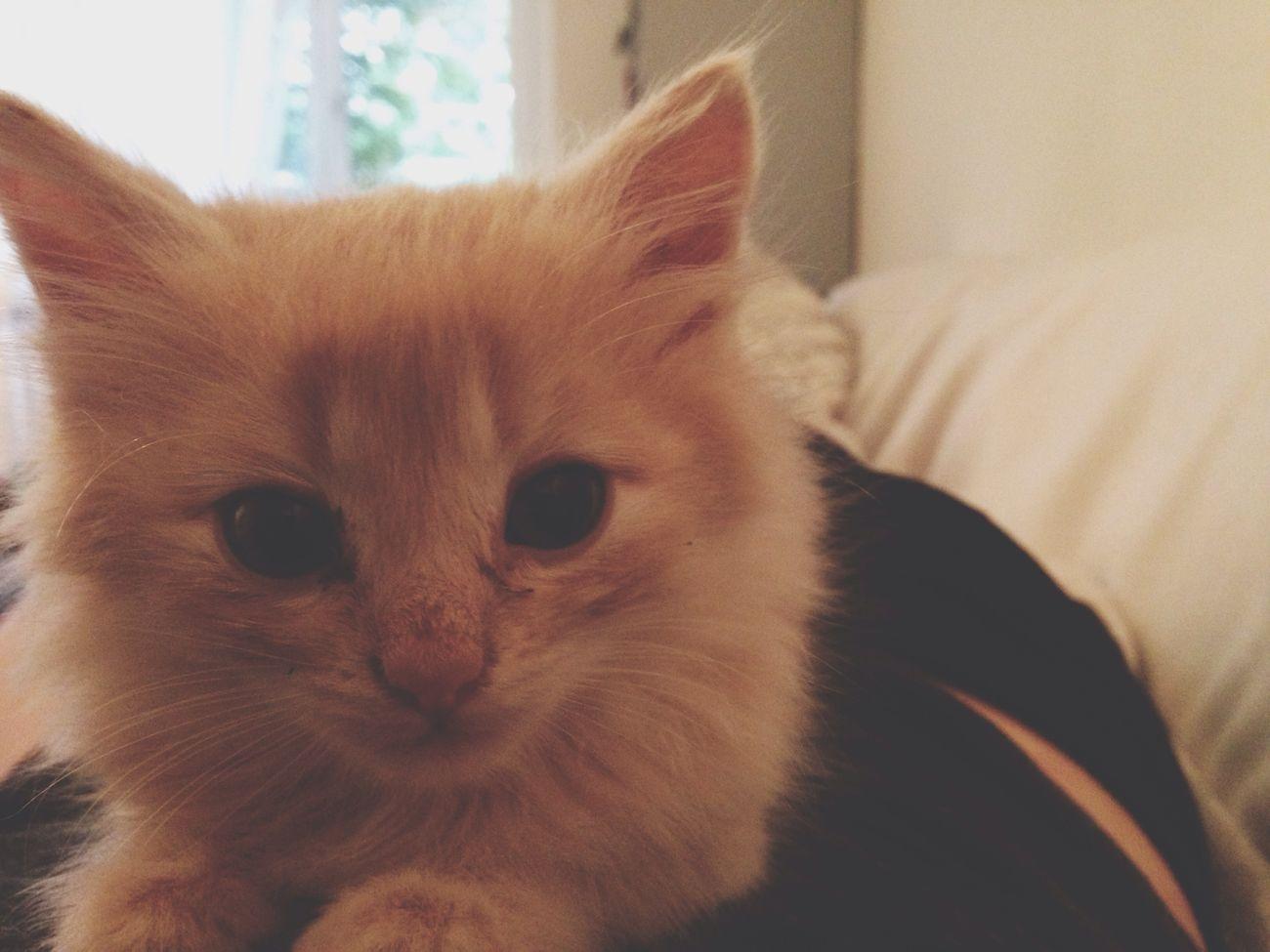 Süsse kleine Maus Babycat Sweet