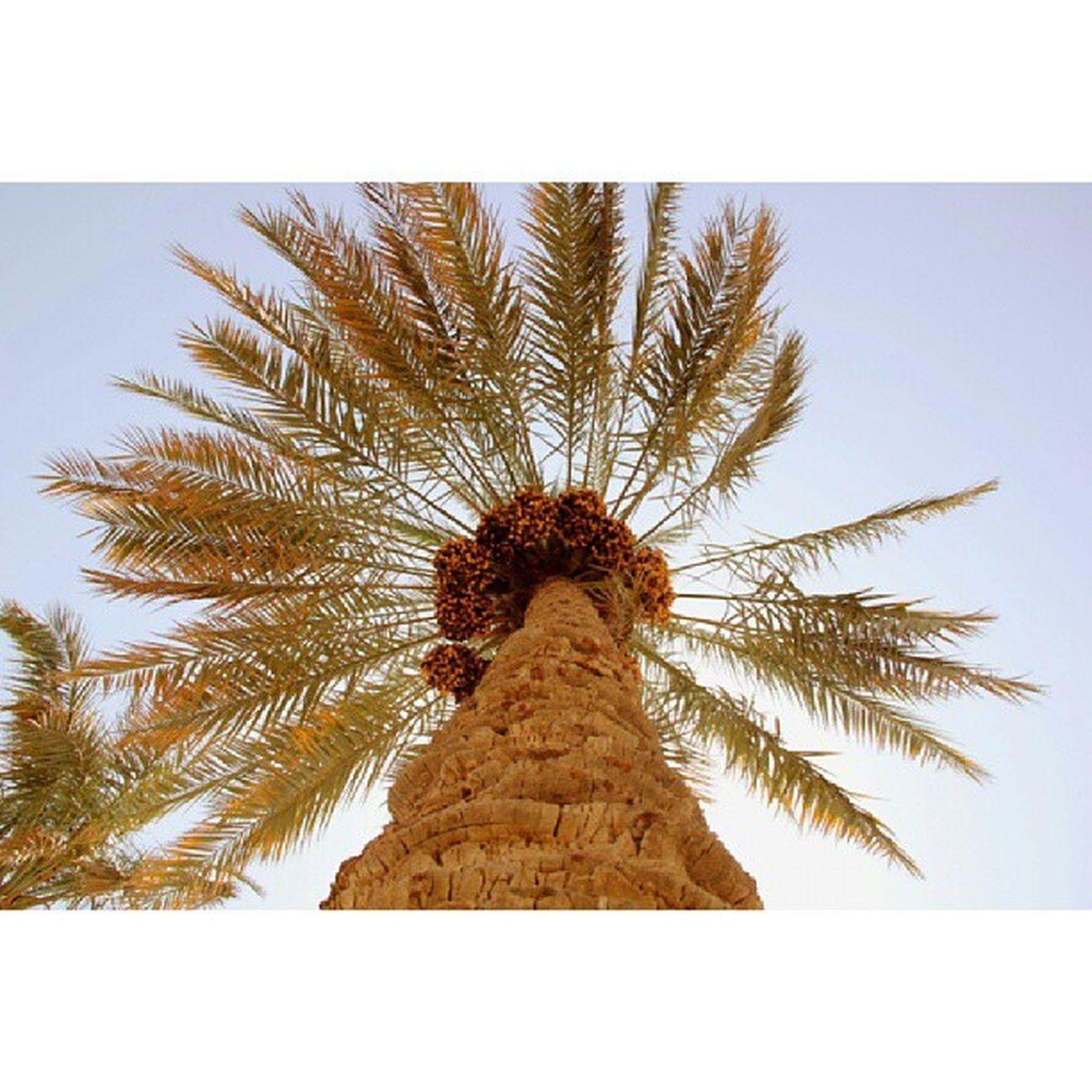 Nature Bh_tree Farm Instamood Instamood Instapic