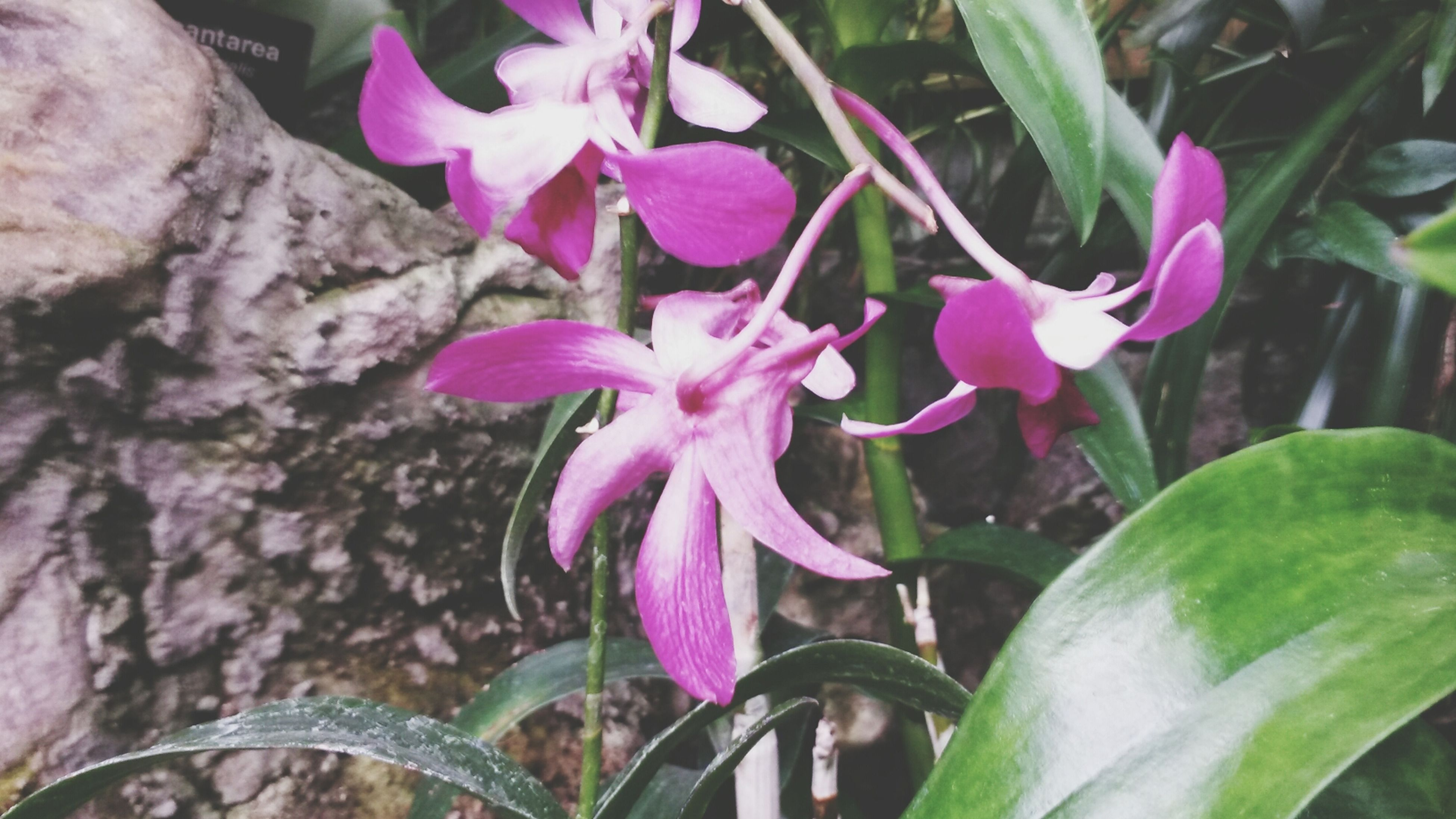 flower, petal, freshness, fragility, growth, flower head, beauty in nature, plant, blooming, pink color, purple, nature, close-up, leaf, in bloom, focus on foreground, stem, outdoors, day, no people