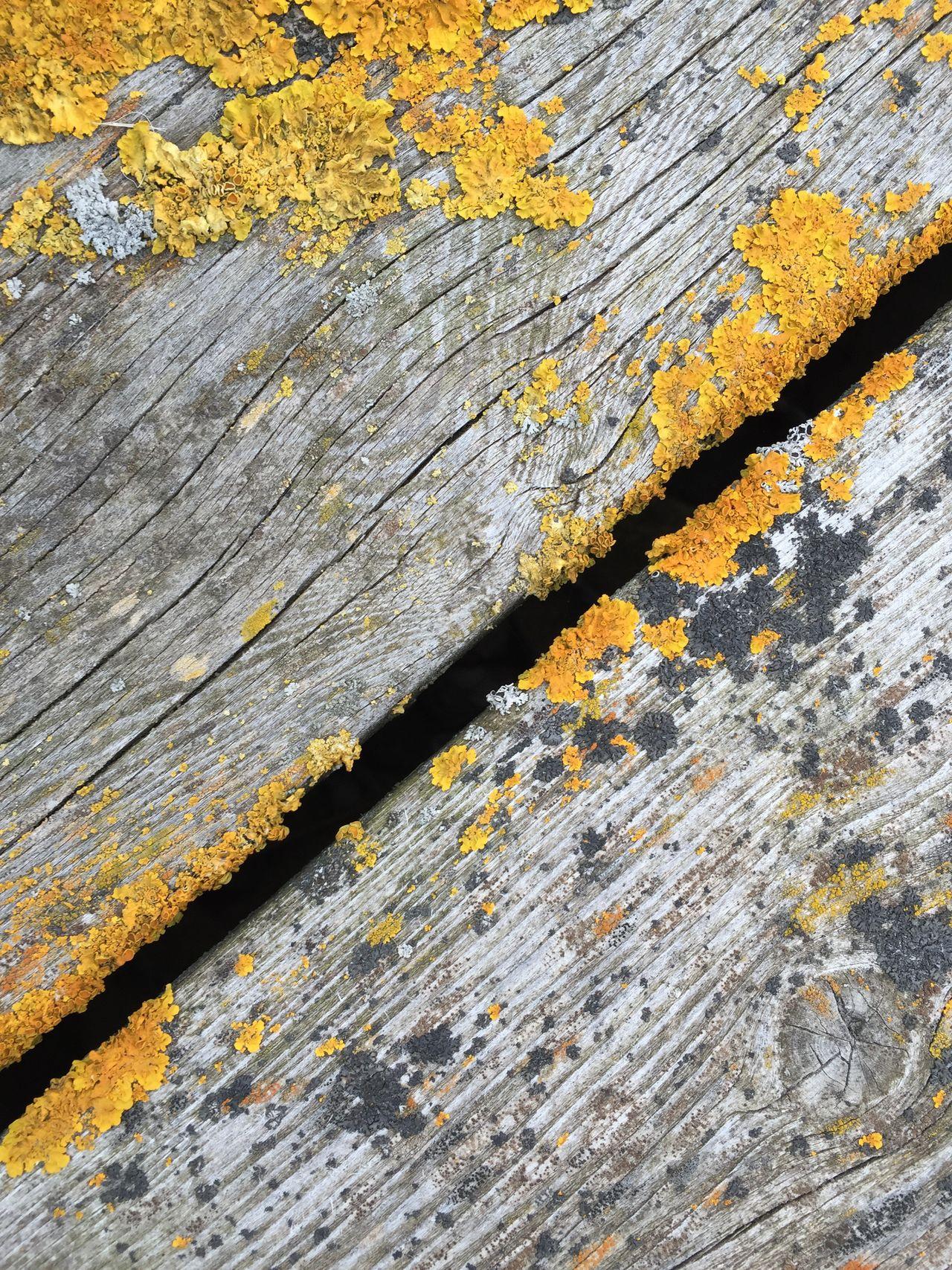 мох дерево доска фактура Mossy Tree Moss On Trees Moss Tree Wood - Material Wood