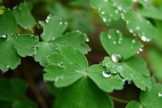 Making the most of a rainy week. Rain drop beads on new leaves. Green Leaves Water Drops Nature Photography Naturelovers Nature Outdoors Green Growth RainyDays Waterdrops Beauty In Nature Green Color Water Droplets Beads Of Water