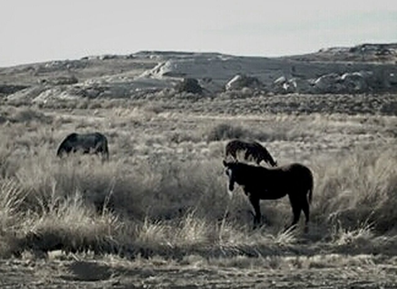 What Does Freedom Mean To You?Wyoming Wild Horses Are Natural Beauty Wild Horses Grazing