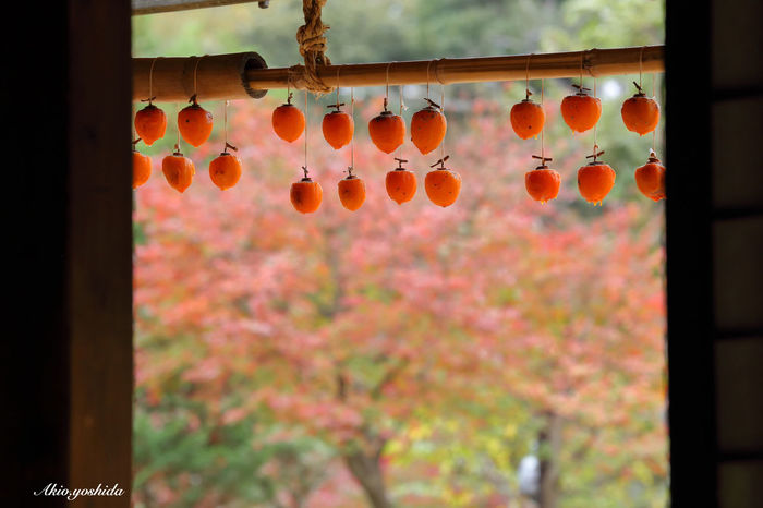 日本の秋 Autumn in Japan Persimmon Popular Photos EyeEm Best Shots Taking Photos Nature Colors Of Autumn Autumn Autumn Colors EyeEm Best Shots - My Best Shot Old House