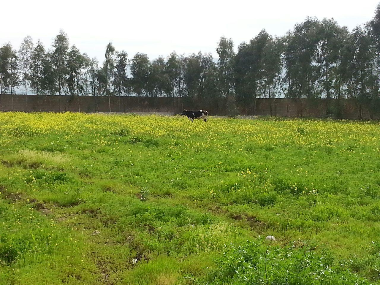Kalakchi Check This Out Hi! Taking Photos Enjoying Life Animlas EyeEm Nature Lover Great