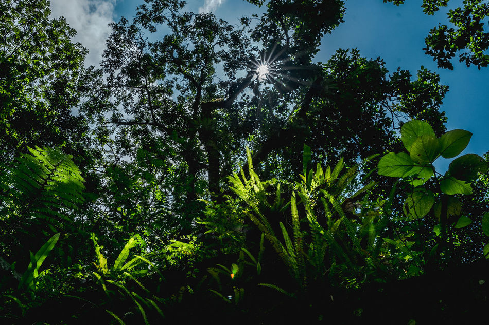 Beauty In Nature Day Green Color Growth Jungle Leaves Love Low Angle View Mexico Nature Nature Nature Photography No People Outdoors San Luis Potosí Sky Sky And Clouds Tree Trees Xilitla