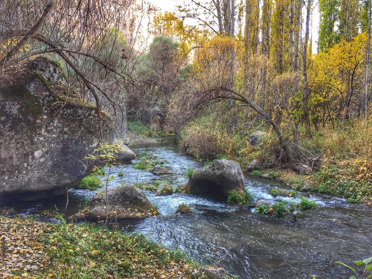 Forest River Nature Tranquility Tree Water No People Beauty In Nature Outdoors Day Tranquil Scene Nature Photography Auntumn IPhoneography IPhone Photography Iphone6plus ıhlara Vadisi