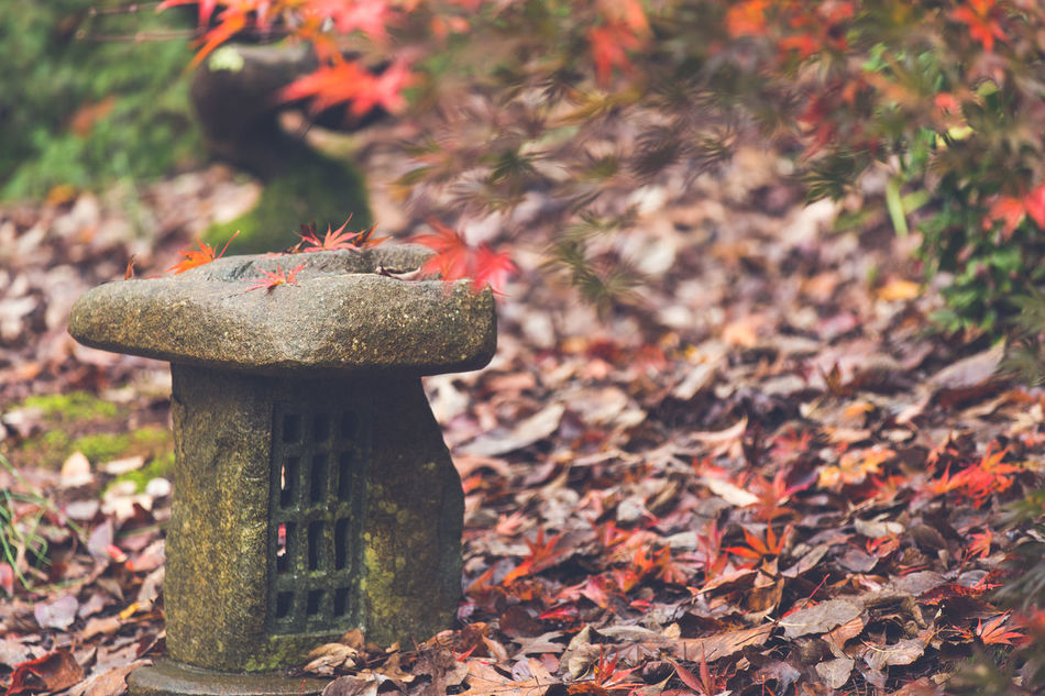 Asian stone gardens Abundance Asian Culture Asian Garden Autumn Botany Change Close-up Day Dry Fallen Ground High Angle View Leaf Leaves Natural Pattern No People Outdoors Pagoda Peace Red Sculpture Spirituality Tranquility Wood Zen