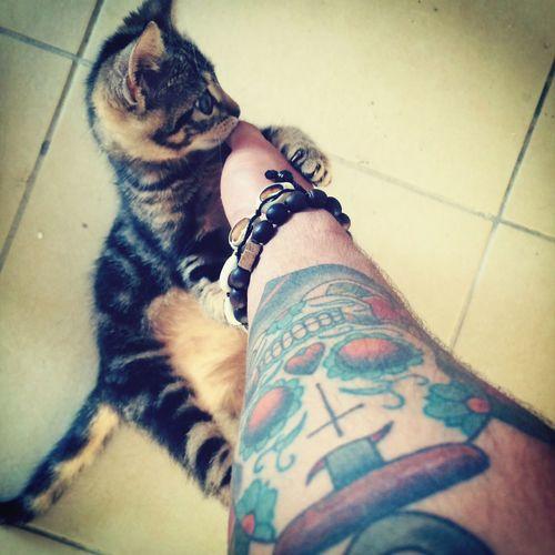Ink Addict  Ink Inked Cat #wonderfull