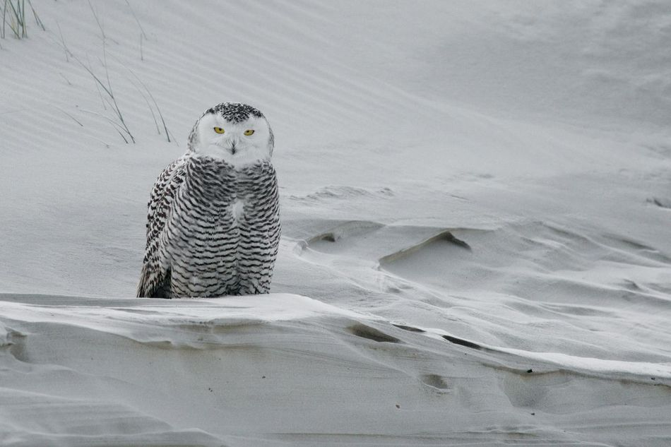 Beautiful stock photos of eule, Animal Themes, Animal Wildlife, Animals In The Wild, Beach