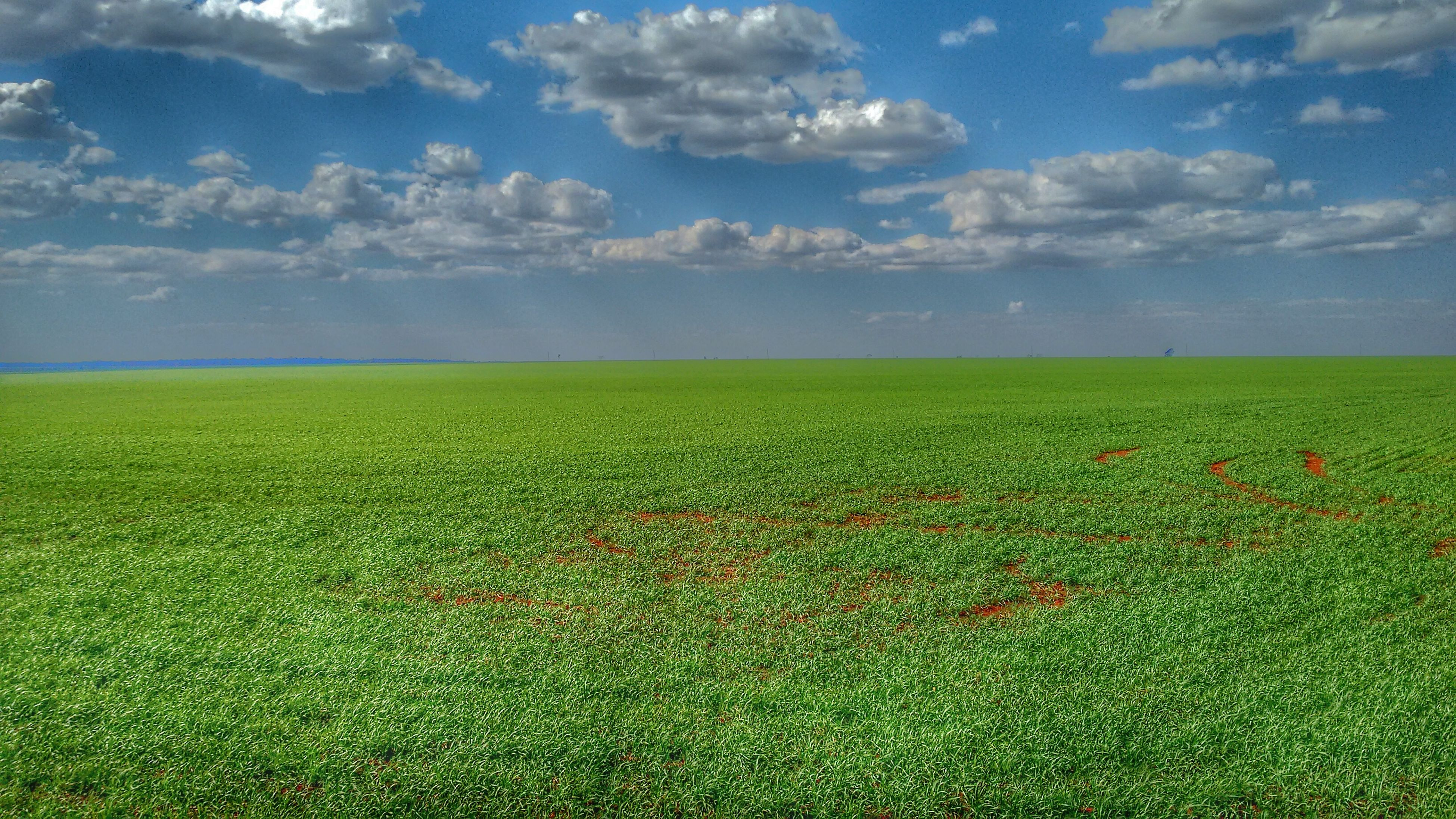 landscape, field, sky, tranquil scene, tranquility, beauty in nature, scenics, agriculture, rural scene, nature, cloud - sky, growth, horizon over land, green color, cloud, grass, idyllic, cloudy, cultivated land, yellow, outdoors, no people, day, remote, weather, plant, non-urban scene, grassy, green, blue