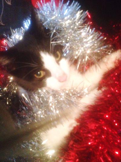 Christmas spirit My Cat Kitten Christmas Decorations Tinsel  Cute