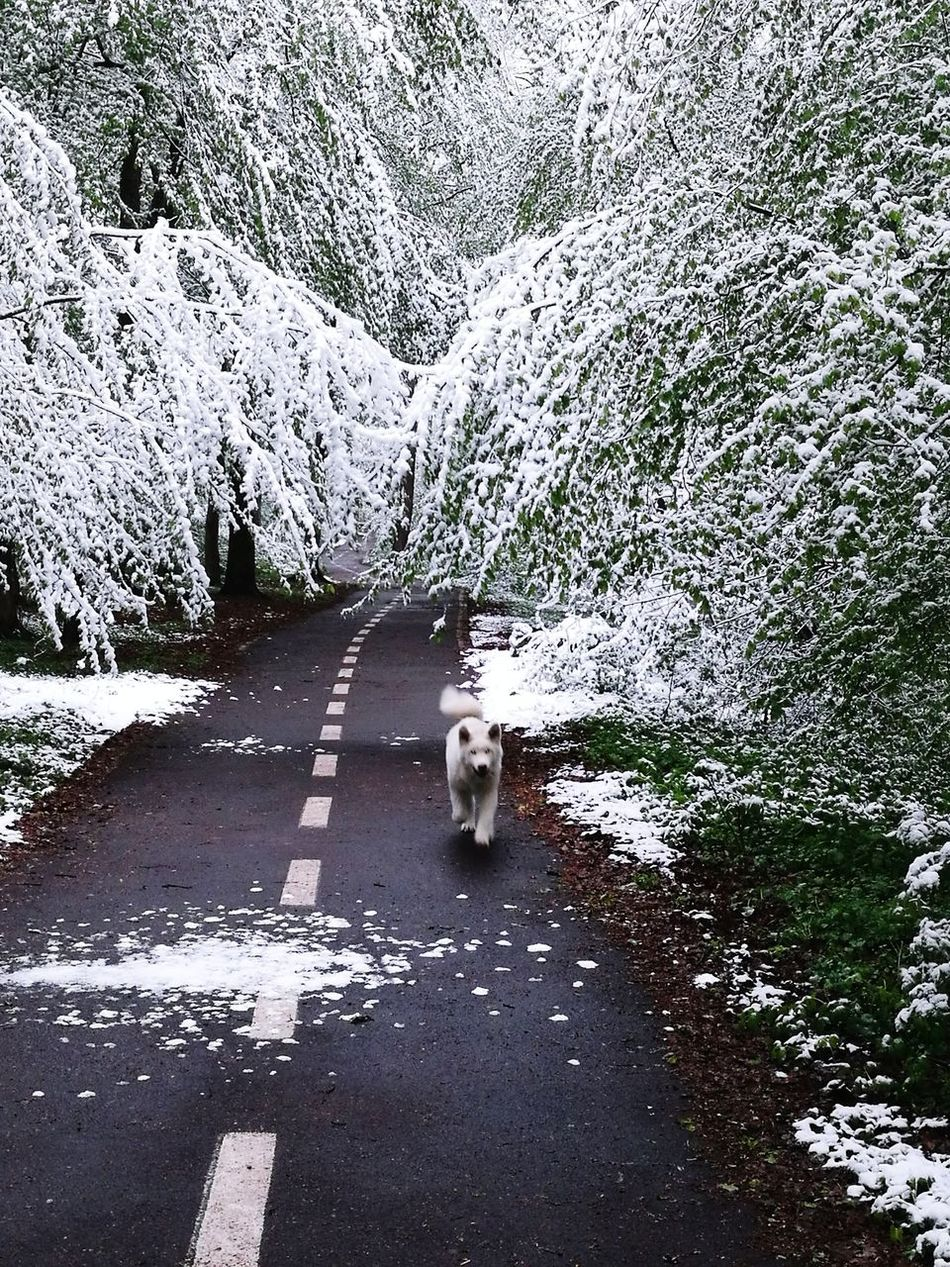 Late snow First Eyeem Photo