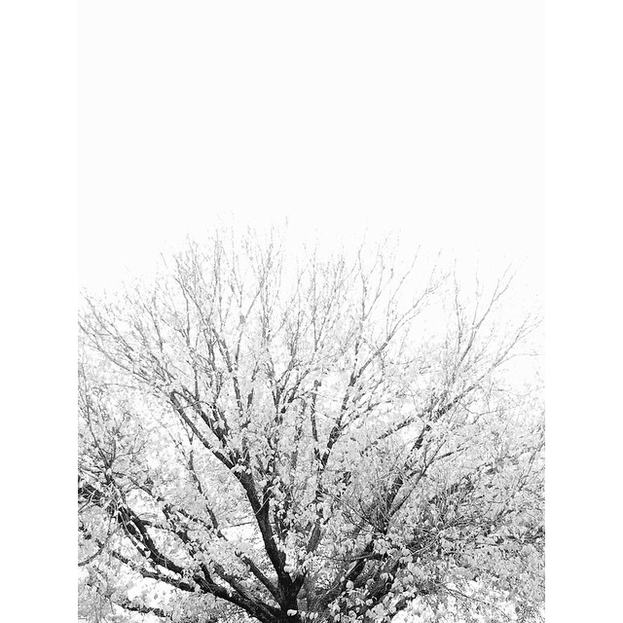 tree, nature, branch, bare tree, beauty in nature, flower, blossom, low angle view, clear sky, day, no people, tranquility, outdoors, growth, freshness, springtime, fragility, sky