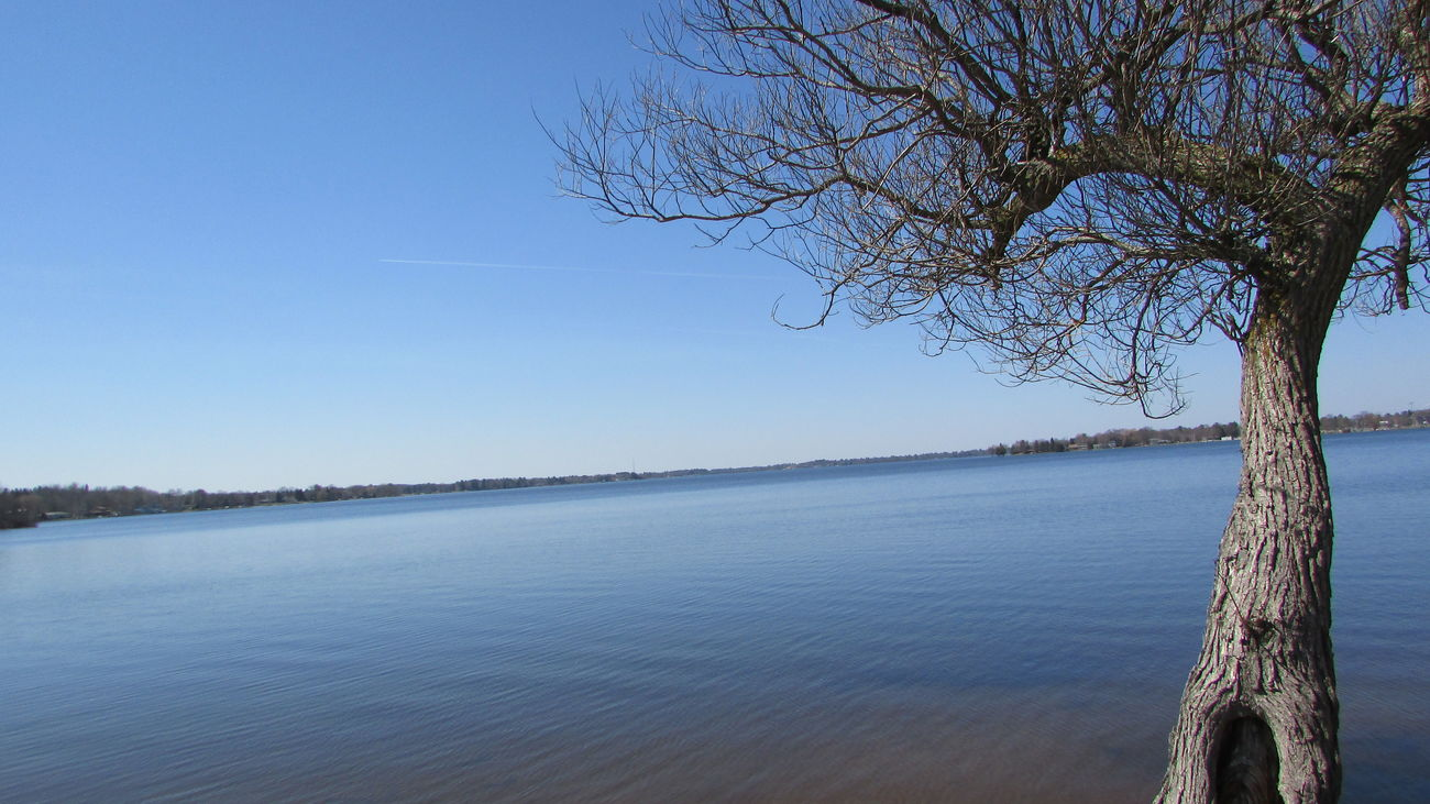 Lonely Tree Lake Cadillac TwistedBlue Sky Spring Day Still Water Calm Quiet Places Pure Michigan