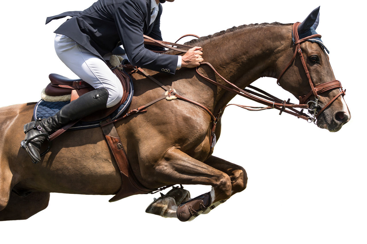 Horse Jumping, Equestrian Sports, Isolated on White Background Animal Barrier Beautiful Competition Cut Equestrian Equestrian Sports Event Horse Horse Jumping Horse Racing Horseback Riding Horseman Isolated White Background Jump Jumper Obstacle Purebred Rider Riding Showjumping Sportsman Stallion White Background équitation
