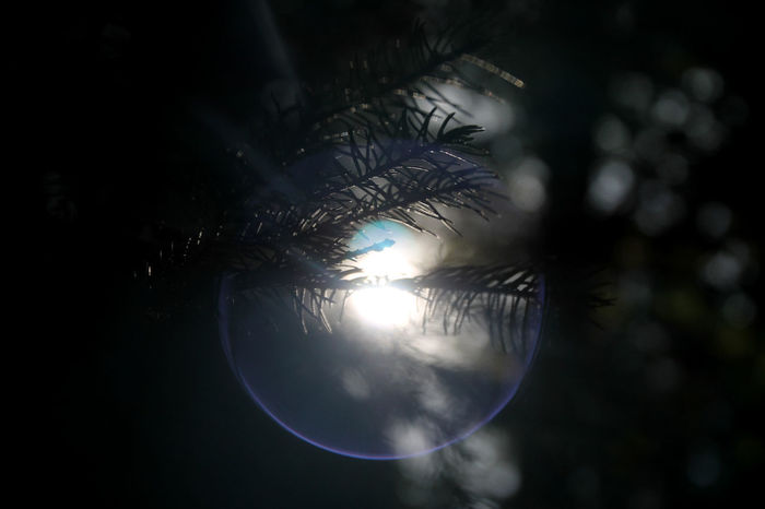 Light Play Autumn Light Close-up Day Forest Photography Light And Dark Light And Shadow Nature No People Outdoors Pine Tree Reflection Ring Of Light