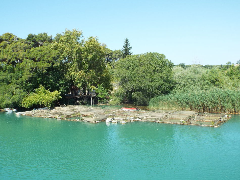 Trout farm on the Manavgat River Trout Farm Manavgat River Blue Sky Blue On A Boat Day Trip River Water Trees