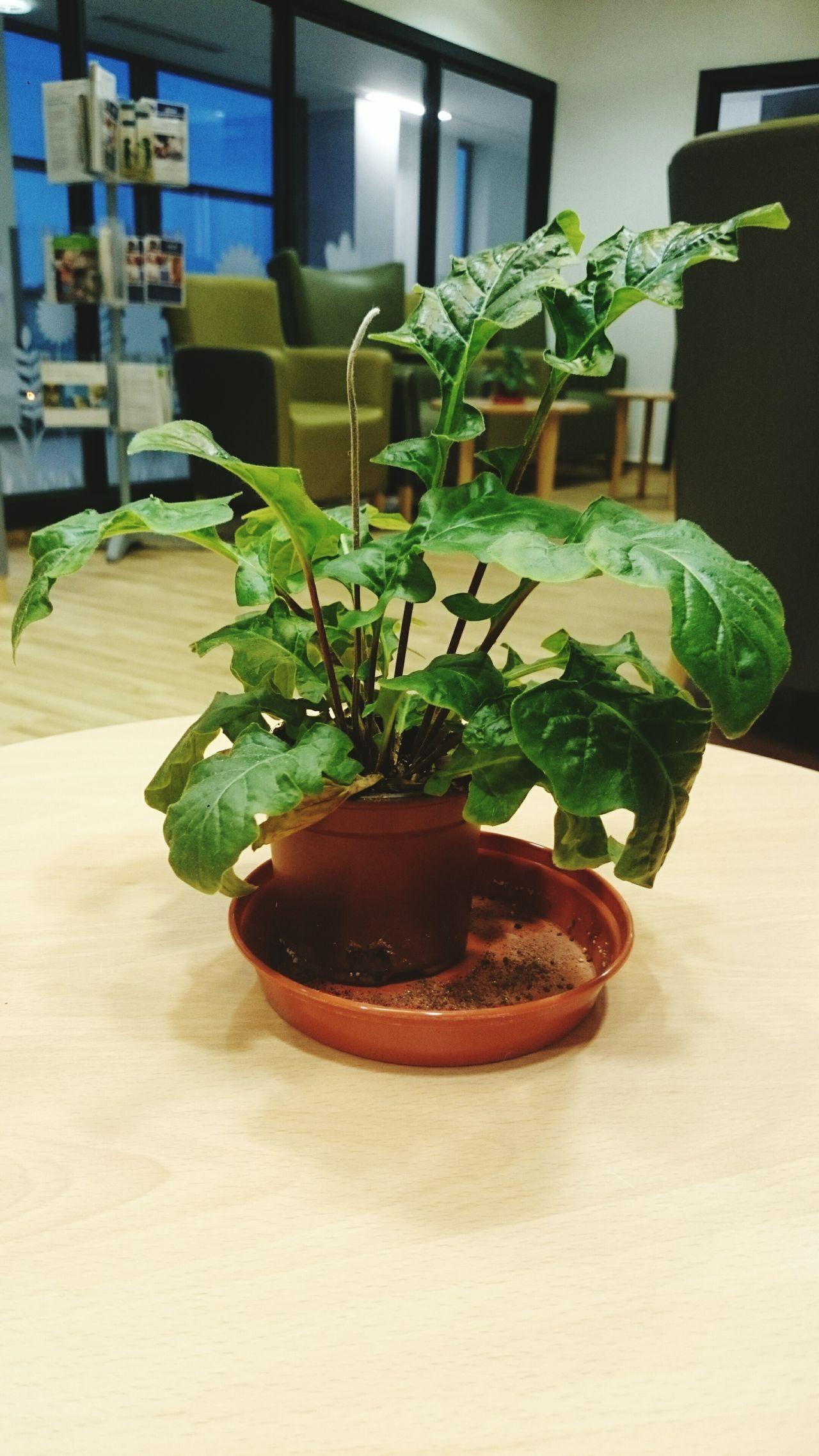 Plant Backgound Defocus Focal Point Green April Showcase April 2016