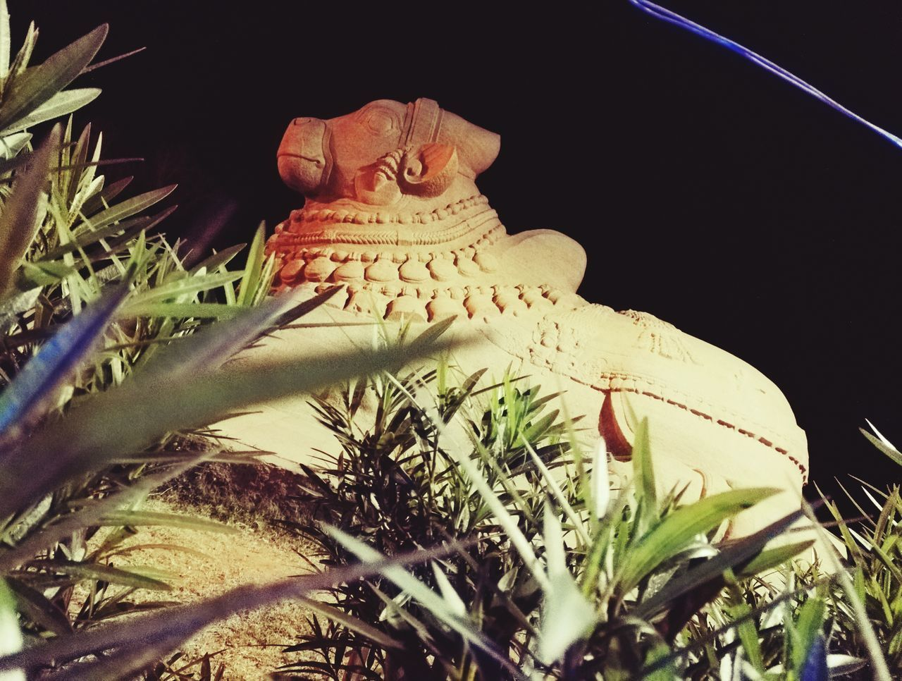 No People Growth Low Angle View Outdoors Nature Night Close-up Bull Statue Night Out Memories Love And Passion Of Photography EyeEm Best Shots EyeEm Gallery