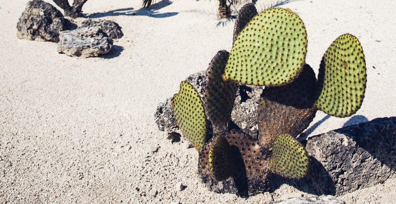 Austria Big Cactus Cactus Desert Fake Landscape Hard Desert Landscape Miniature Landscape Sharp Cactus