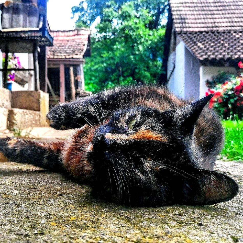 Cat Black And Yellow  Nature And Animals Cheese! Hanging Out Relaxing Enjoying Life Animal Photography Cat Photography Cat Lovers