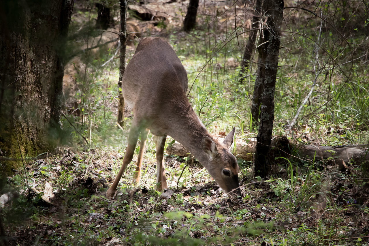 Deer Moments Deers Nature Beauty Peace Deersighting One Animal Animals In The Wild Tree Animal Themes Mammal Animal Wildlife Day No People Grass Outdoors Forest Nature Sunlight Shadow Full Length Safari Animals Elephant Leopard