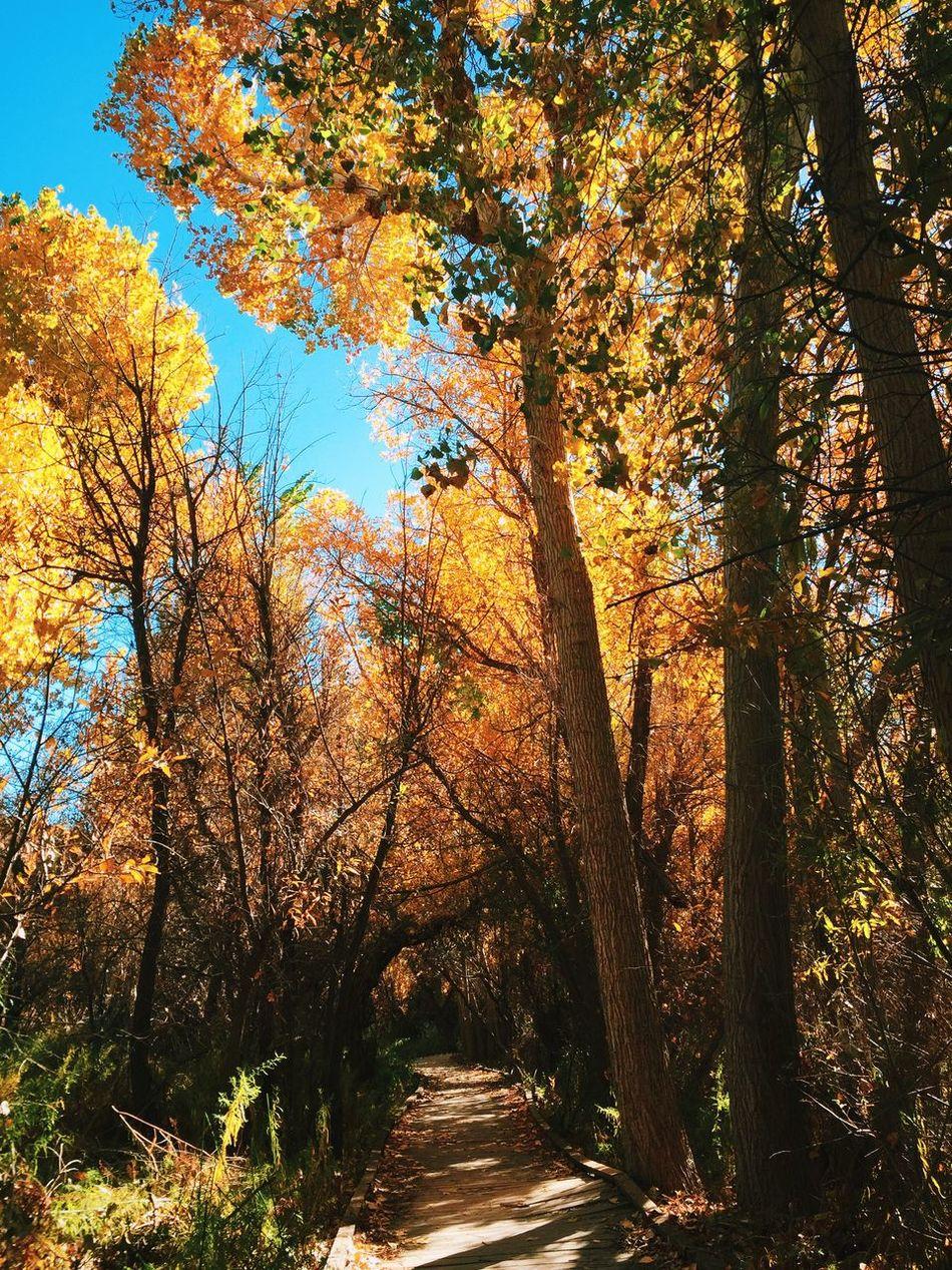 Big Morongo Canyon Preserve: Autumn Nature Hiking Landscape Autumn Fall Fall Colors Outdoors Autumn Colors Colors Of Autumn Season
