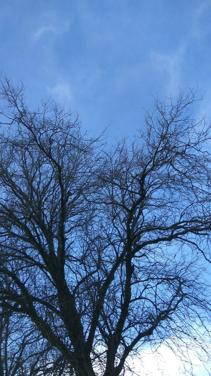 low angle view, sky, nature, branch, bare tree, no people, beauty in nature, tree, outdoors, tranquility, day, blue, scenics
