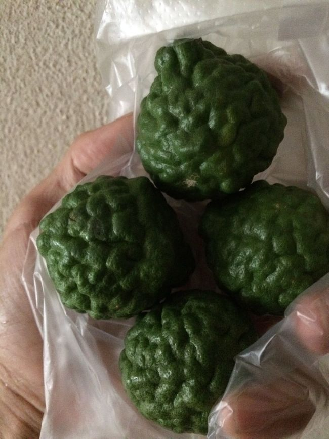 Leech Lime Porcupine Orange
