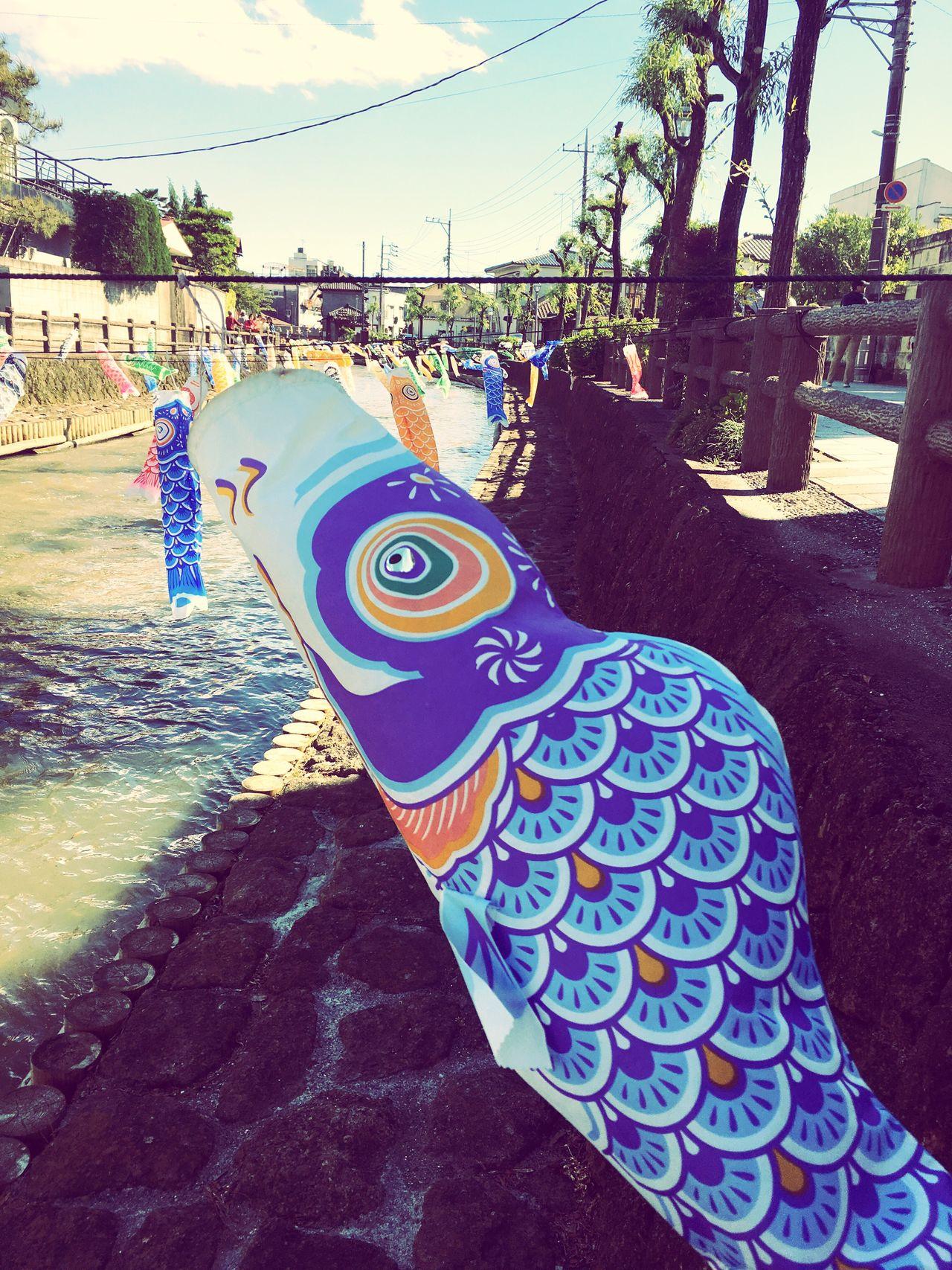 Fish River Riverside River View Riverside Photography FishEyeEm Eye4photography  Urban Spring Fever s